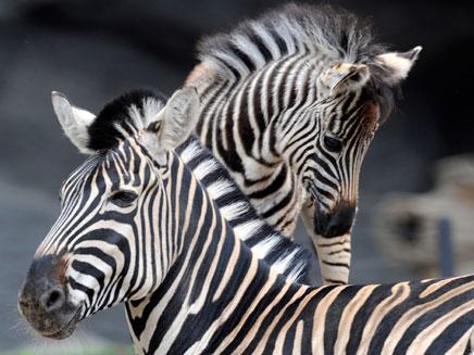 עשרות בעלי חיים יוטסו לגן החיות באיזמיר (צילום: רויטרס)
