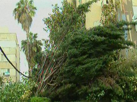 עצים קרסו בפתח תקווה (צילום: חדשות 2)