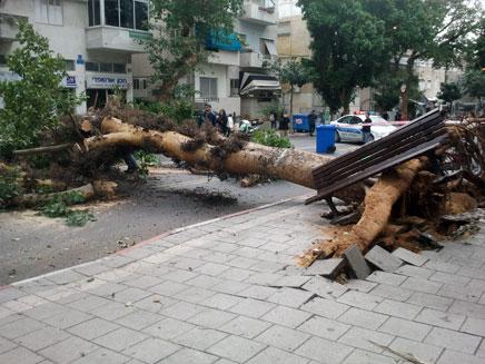 """עץ שקרס בת""""א (צילום: גדעון אוקו, חדשות 2)"""