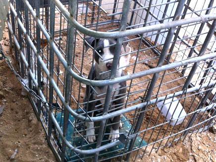 כלבה נפלה קורבן להתעללות (צילום: אייל פבזנר, משרד החקלאות ופיתוח הכפר)