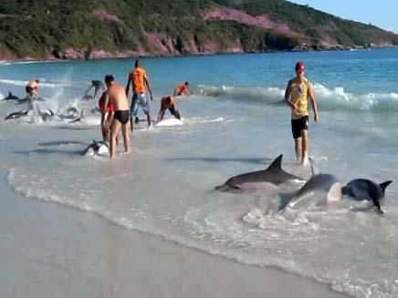 """צפו: """"מבצע דולפין"""", בברזיל (צילום: חדשות 2)"""