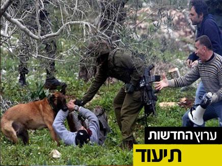 """תיעוד נשיכת הפלסטיני על ידי כלב מג""""ב (צילום: עודאי שתאווי / בצלם)"""