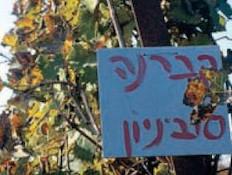 יקב שטרן - באמת הגיע הזמן (צילום: אורלי גנוסר, גלובס)