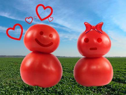 עגבניות בדיחות (צילום: אימג'בנק / Thinkstock)