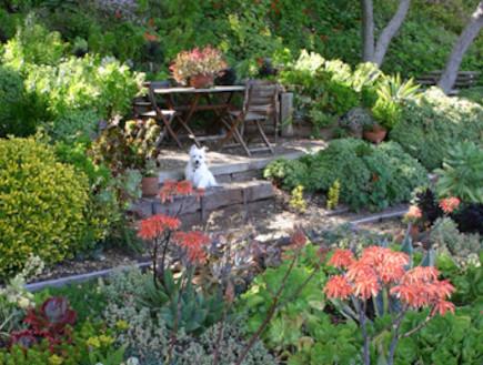 סוקולנטים. גינת פרחים (צילום: נלקח מאתר http://www.debraleebaldwin.com, living)