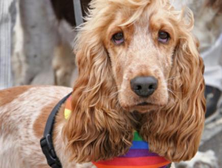 גאווה (צילום: אימג'בנק / Thinkstock)