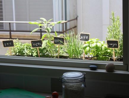 גינון - אדנית צמחי מאכל (צילום: רון לוי)
