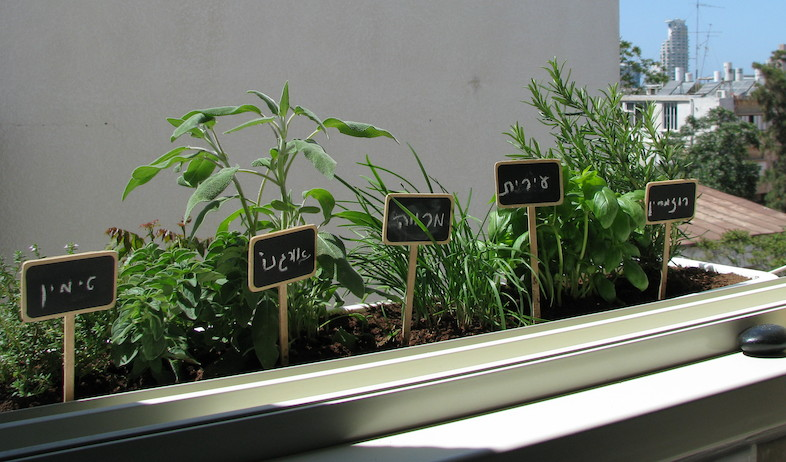גינון - אדנית צמחי מאכל (צילום: עתר ארזי)