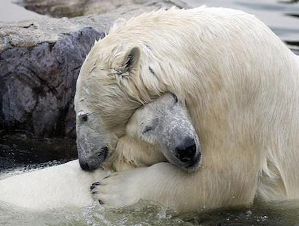 חיבוקי דובים (צילום: worldofwonder.net)