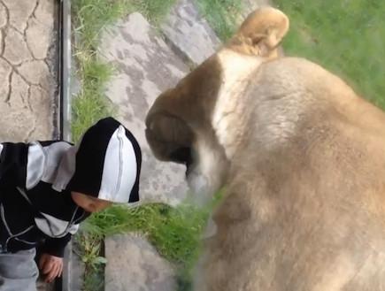 lion vs. baby