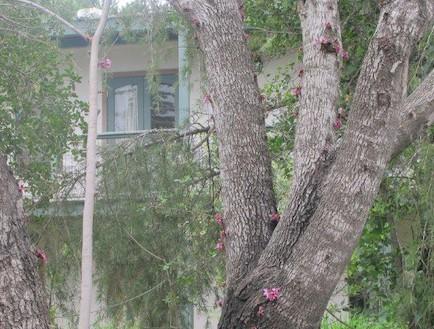 גילדת יודפת. עץ בחוץ