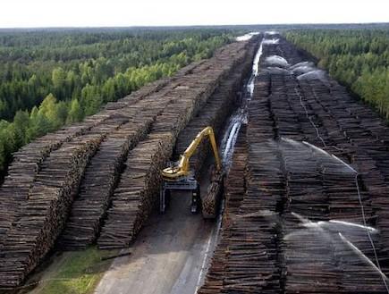 מחסן העצים הגדול בעולם
