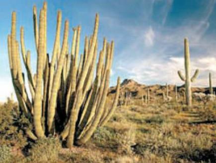 אריזונה - גלויה שקמה לתחייה (צילום: טל פרי, ויז'ואל, גלובס)