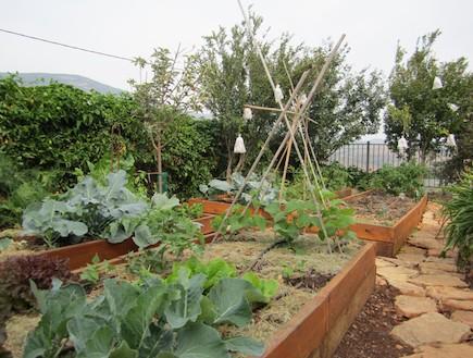 גן ירק התחלה 2 אפרת אלוני (צילום: אפרת אלוני)