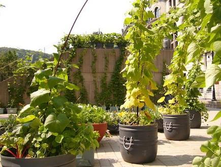 צמחי מאכל. גינה על הגג (צילום: מתוך האתר www.insideurbangreen.org)