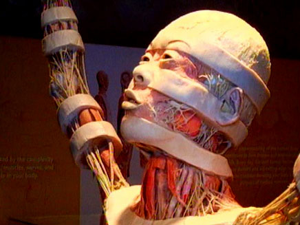 תערוכת גופות האדם (צילום: חדשות 2)