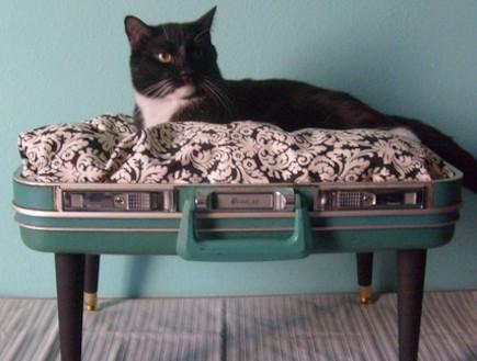 מיטות לבעלי חיים, מיטה בדמוי מזוודה (וידאו WMV: conversation pieces)