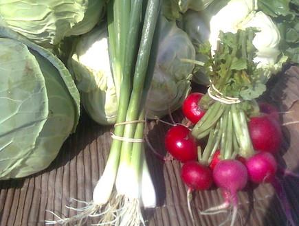 ירקות הגיא האורגני - באדיבות גיא פרלמן (צילום: גיא פרלמן)