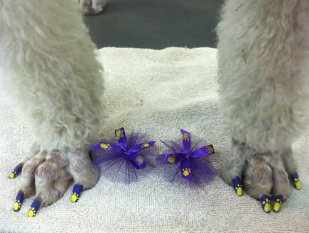 פדיקור לכלבים (צילום: warrenlondon.com)