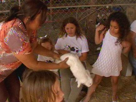 """חג שבועות בחווה בגני יהושוע בת""""א (צילום: חדשות 2)"""