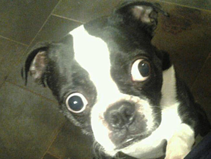 הכלב עם העיניים הכי גדולות בעולם (צילום: guinnessworldrecords.com)