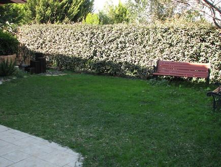 דשא בגינה לפני שיפוץ (צילום: עתר ארזי)