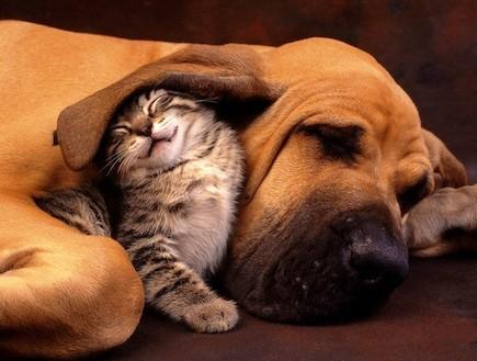כלבים וחתולים ישנים