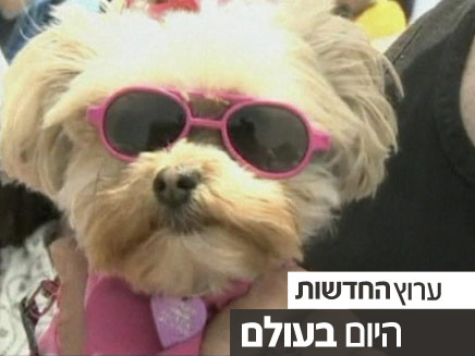תחרות גלישה לכלבים בקליפורניה (צילום: חדשות 2)