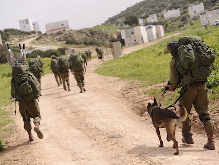 """כלבים וחיות אחרות (צילום: במחנה, עיתון """"במחנה"""")"""