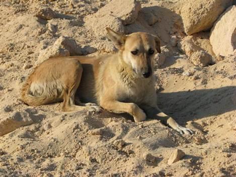 כלבה נטושה בבאר שבע. צילום: תנו לחיות לחיות