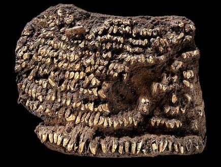 ארנק הנשים העתיק בעולם (צילום: nationalgeographic.com)