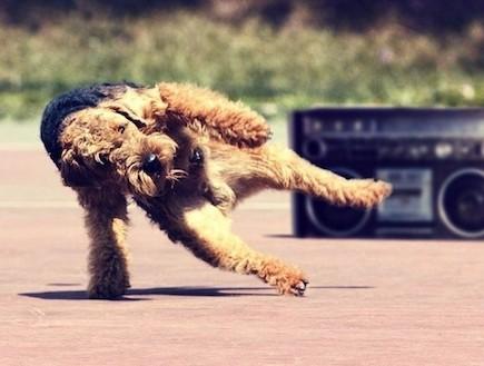 חיות רוקדות (צילום: buzzfeed)
