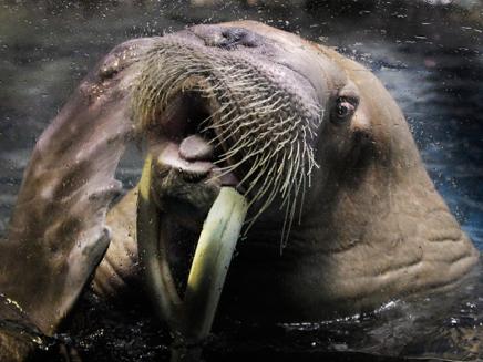 פקקים בגלל אריה ים? אילוסטרציה (צילום: AP)