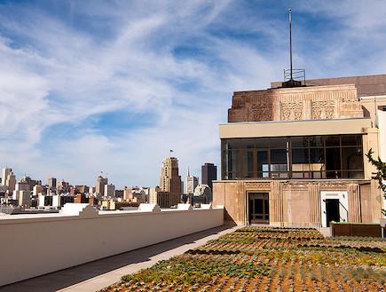 גן הירק על גג הבניין (צילום: Troy Holden)