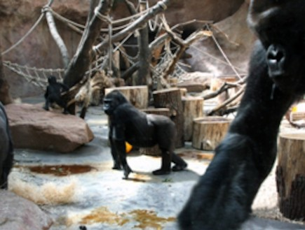 גן החיות בפראג (צילום: zoopraha.cz)