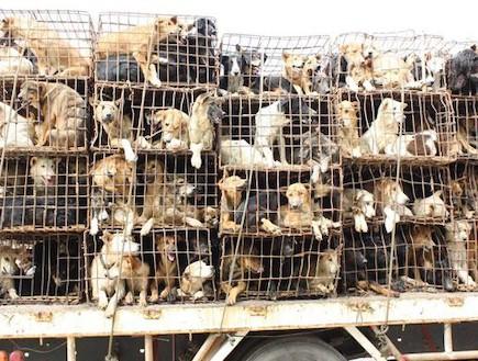 כלבים שניצלו מטבח (צילום: pattayadailynews.com)