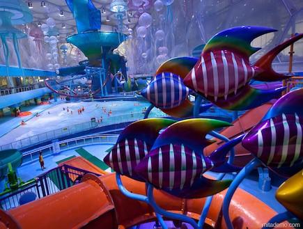 דגים בפארק המים (צילום: מתוך: i-decoracao.com)