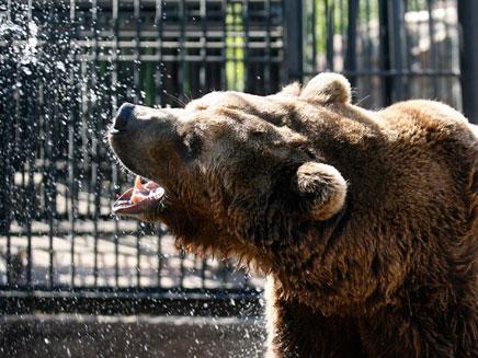 כמו זהבה ושלושת הדובים. אילוסטרציה (צילום: רויטרס)