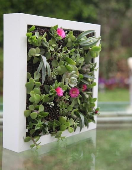 גינה במסגרת-צמחים ירוקים (צילום: איה הקטין)
