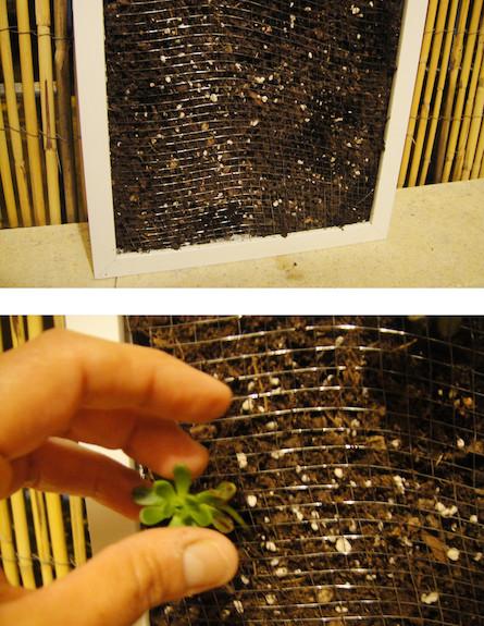 צמח במסגרת-גינה במסגרת (צילום: דידי רפאלי)