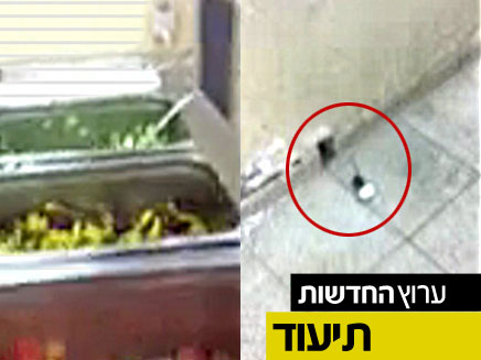 צפו בעכברים בחדר האוכל הצבאי (צילום: חדשות 2)