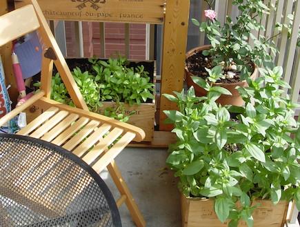 מרפסת עם כיסא (צילום: נופר חיימוביץ' ואלעד ברוך)