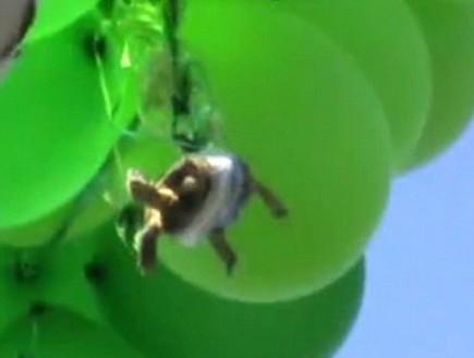 צב דבוק לבלונים (וידאו WMV: 10news.com)