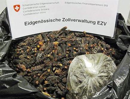 חרקים מתים (צילום: austriantimes.at)