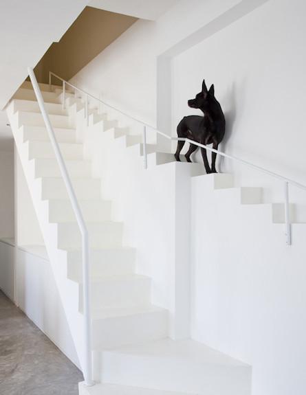 מדרגות מיוחדות לכלבים (צילום: Hiroyuki Oki of Decon Photo Studio)