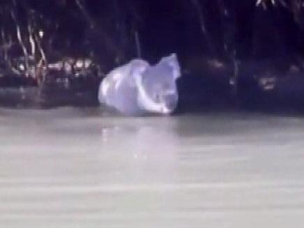 היונק בביקור נדיר במי נהר (צילום: sky news)