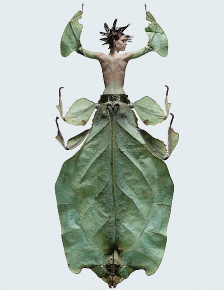חרקים נשיים (צילום: laurentseroussi.com)