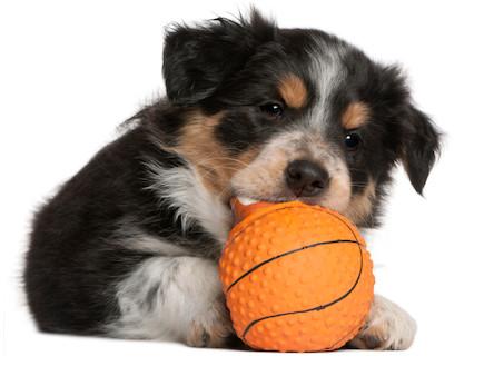 הכלב של המדינה (צילום: אימג'בנק / Thinkstock)