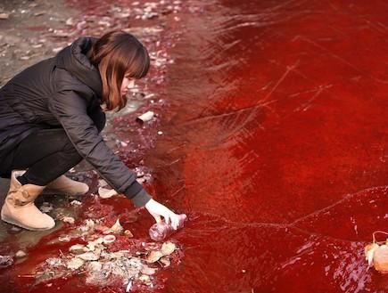 נהר היאנגצה בסין שינה צבעו לאדום (צילום: cfp.cn)