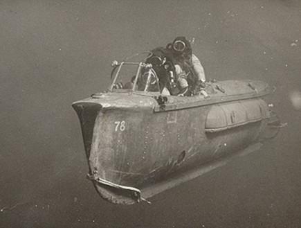 חזיר חיל הים